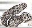 Logo Squirrel mail