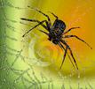 Immagine ragno intrappolato nella ragnatela, sullo sfondo @